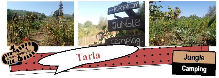 Kayaköy Jungle Camping Tarla