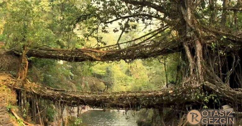 Hindistan Meghalaya Living Root Kopruleri