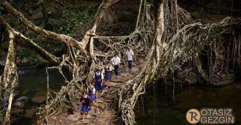 Hindistan Root Kopruleri